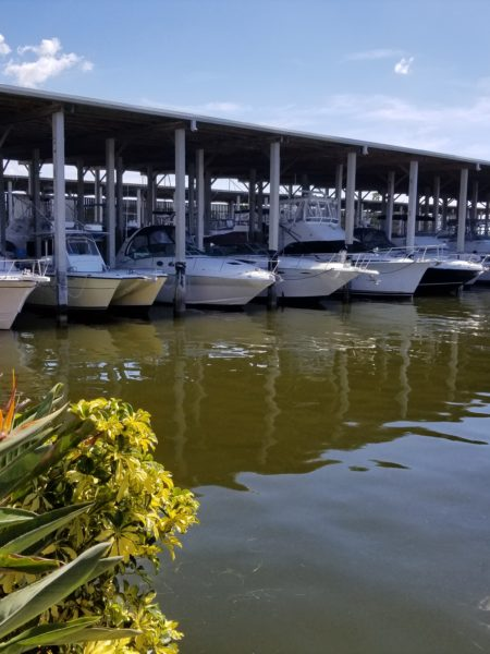 Boat Hull Cleaning. Tampa Bay Florida. Alex's Dive Service Inc. Home Port Marina Ozona